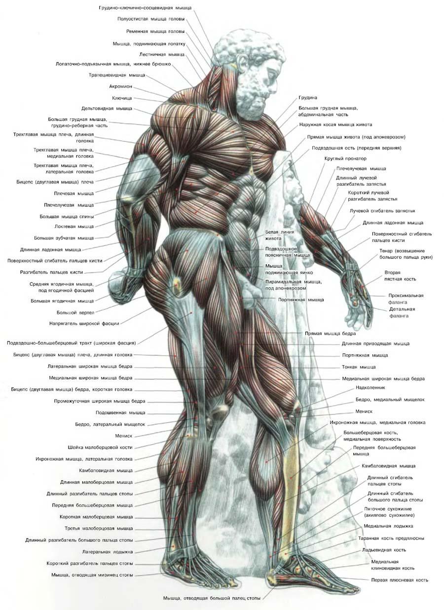 схема силовых упражнений