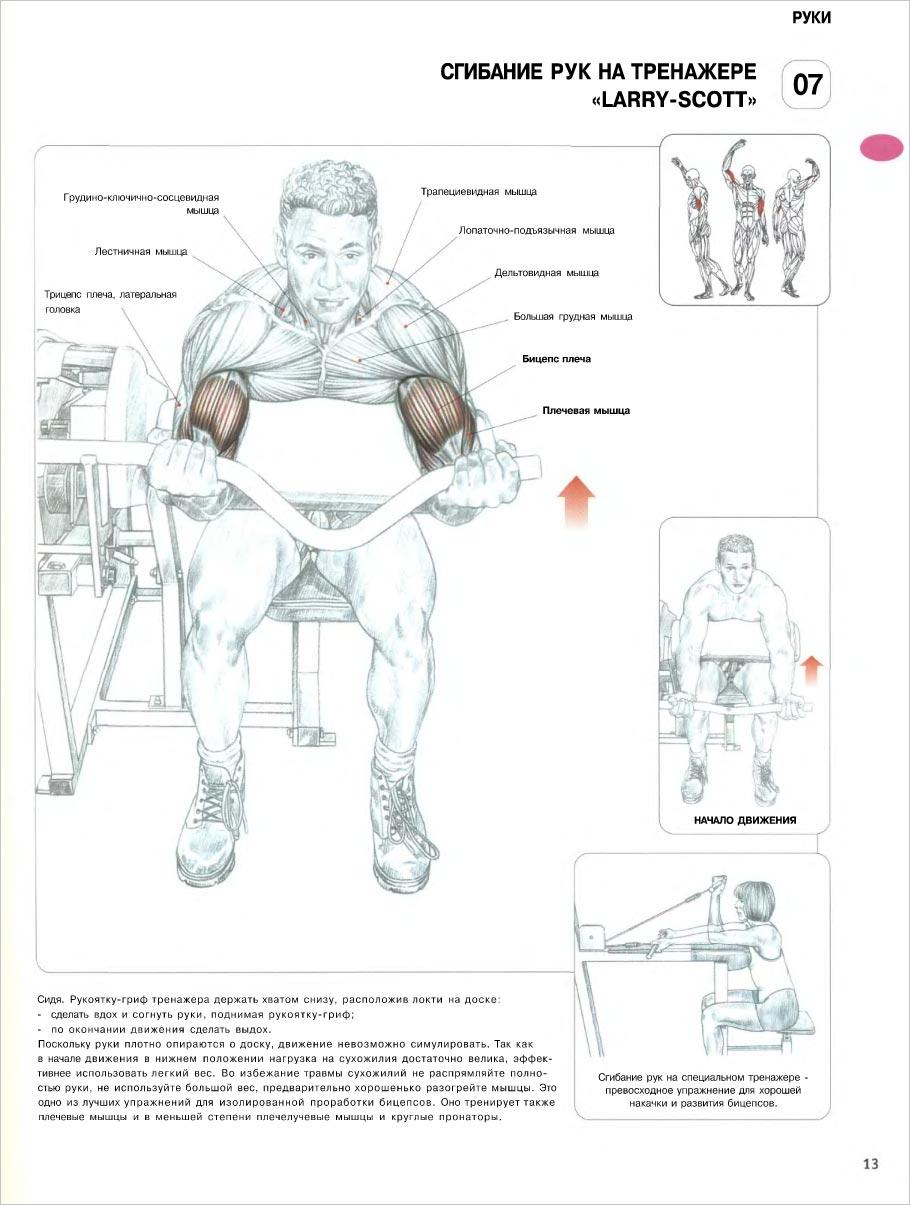 картинках силовые скачать упражнения