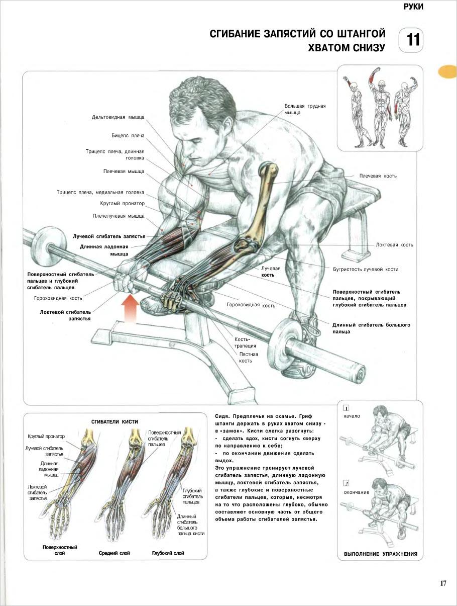 Скачать книгу как правильно качать мышцы