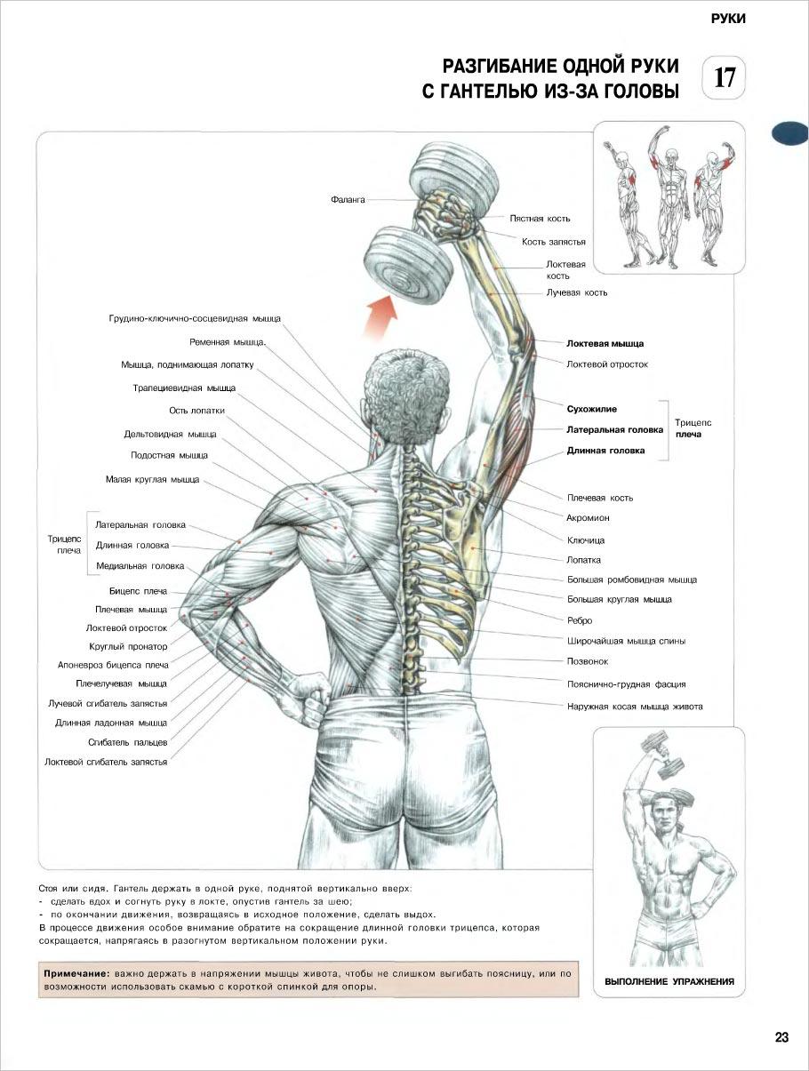 Как правильно набрать и нарастить мышечную массу 56