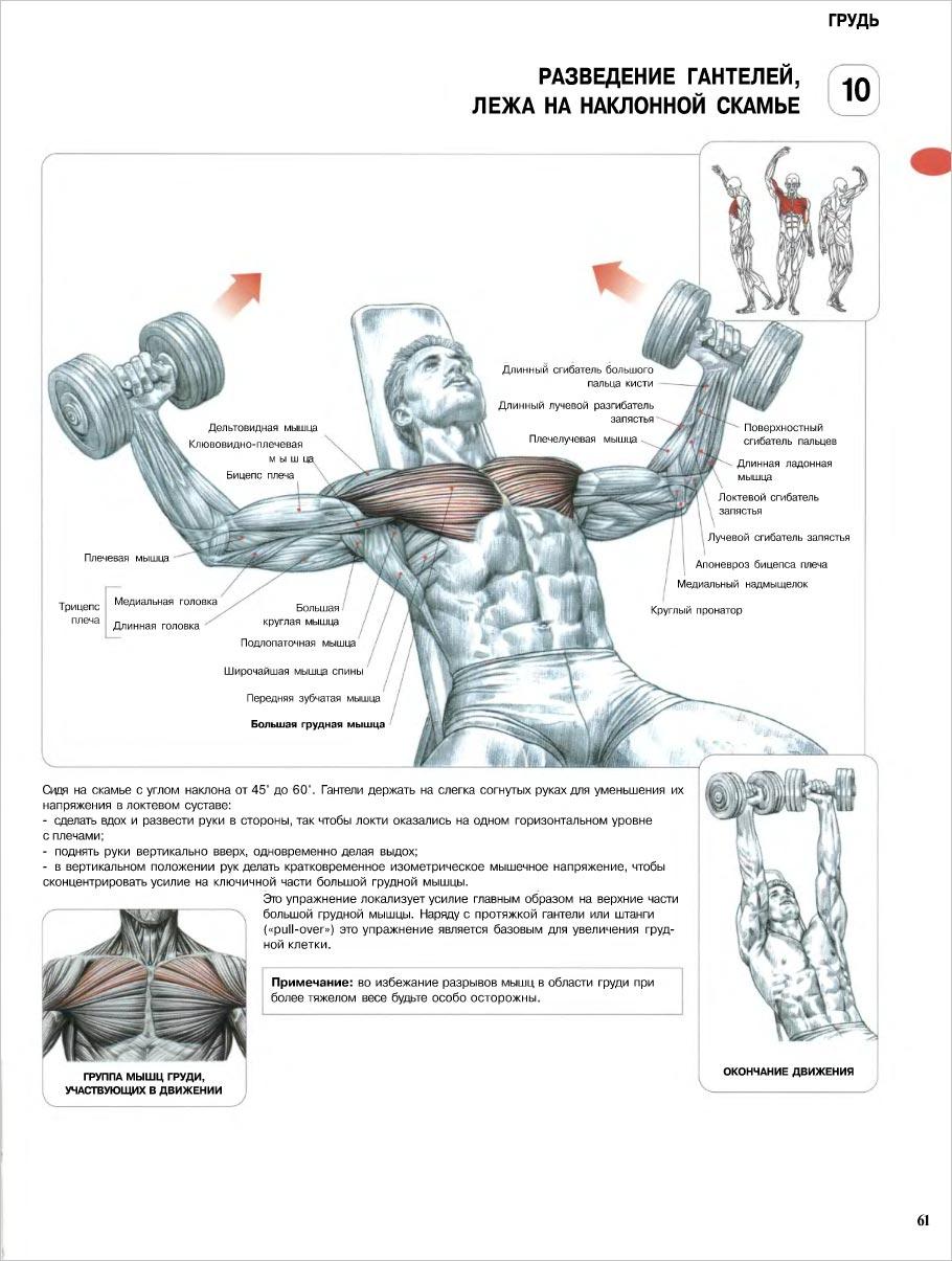 Скачать бесплатно анатомия силовых упражнении pdf