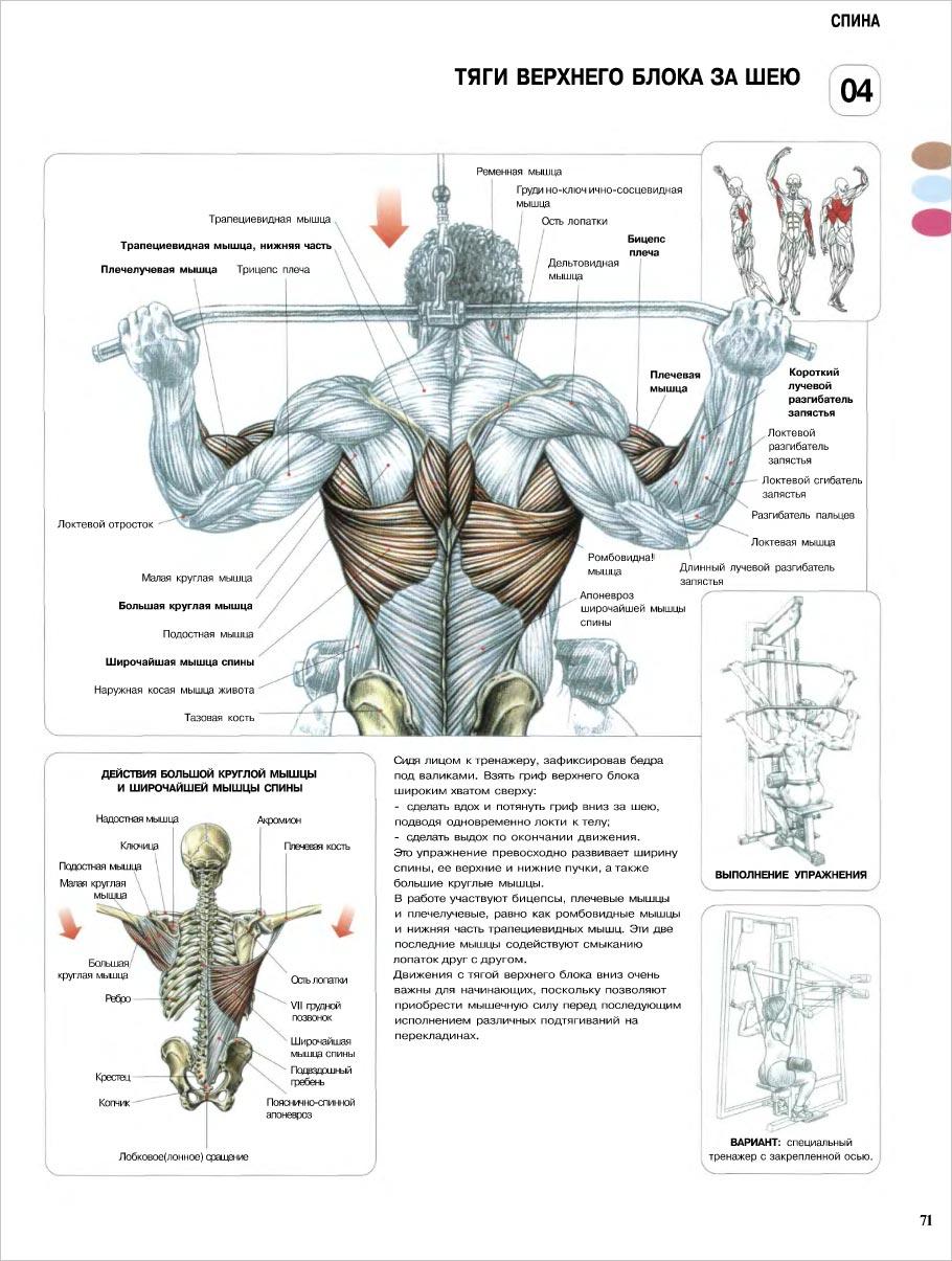 Анатомия силовых упражнений pdf скачать