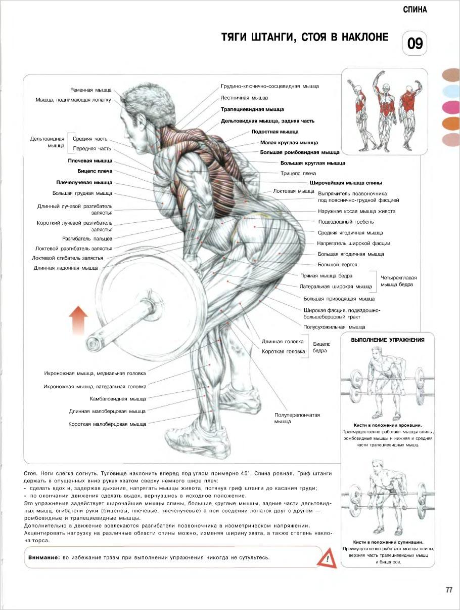 накачать мышцы спины поясницы
