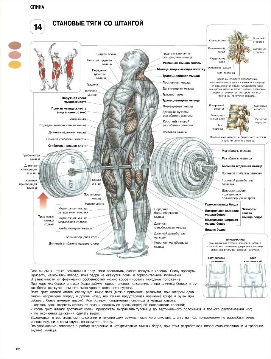 Делавье анатомия силовых упражнений word